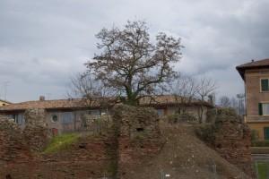 Sulle vecchie mura la natura prende il sopravvento