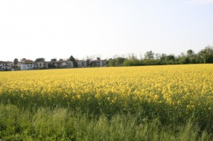 primavera a lainate
