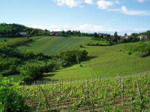 verde Monferrato