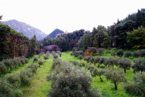 Monreale - Una uggiosa giornata fra i Pini e gli Ulivi di San Martino delle Scale.