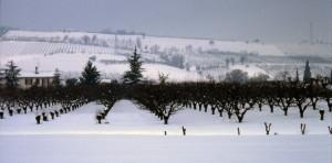 i frutteti della zona collinare a Codrignano