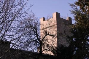 Rami scuri e torre chiara