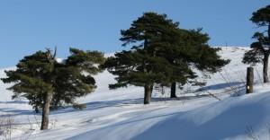 Inverno a Tana d'Orso