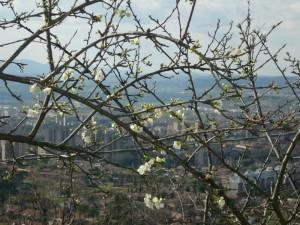 profumo di primavera