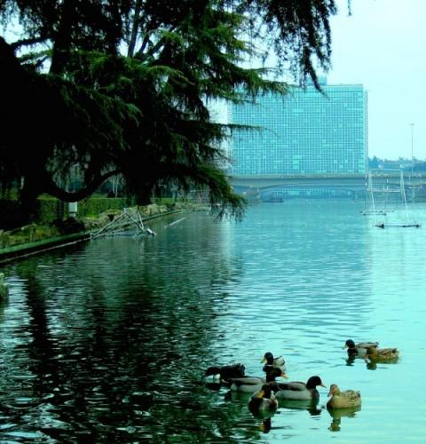 Roma - Paperelle di legno nel laghetto dell'Eur?