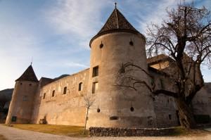 Il castello e l'albero