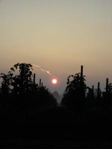 tramonto a canolo