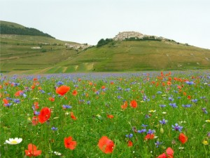 Primavera a Castelluccio