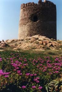la primavera stende un tappeto rosa all'antica torre