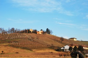 Vascagliana le vigne del Barbera