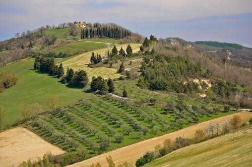 Montone - Montone