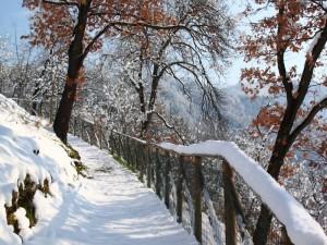 L'ultima neve in collina