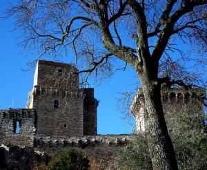 L'albero e la Rocca