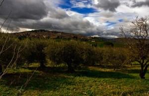 i campi assolati di Aragona