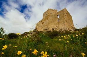 Prato, margherite e cielo sotto al castello 2