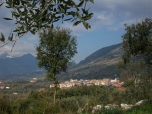 l'ulivo sul Borgo