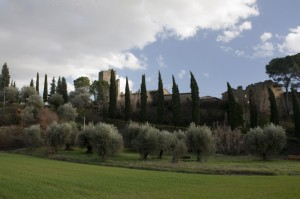 Castel Zocco tra gli ulivi