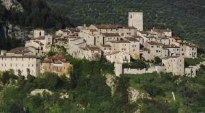 L'ulivo dell'antica torre