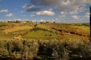 La bellissima campagna toscana - Il Pino/S.Lazzaro