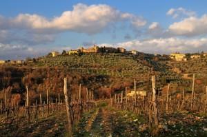 La bellissima campagna toscana - S.Donato in Poggio