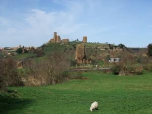 Tuscania3
