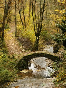 Il ponte nel bosco
