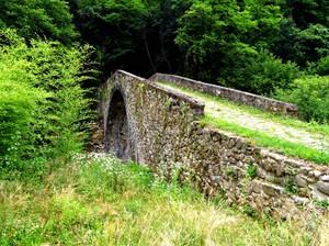 Il ponte immerso nel verde…