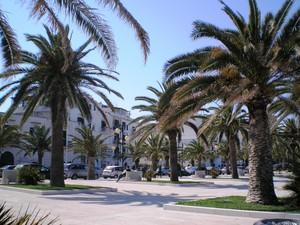 piazza all'ombra delle palme.