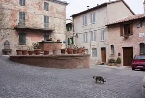 Piazza Cavour…con gatto.