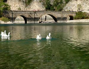 Una nuotatina verso il ponte