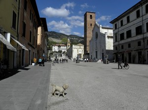 Barboncino in Piazza