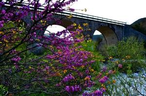 Colori e profumi sotto un arido ponte – Ponte su Rio Chiaro – Colli a Volturno