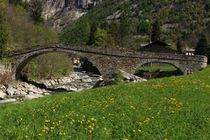 Un ponte tra i fiori di tarassaco