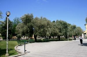 Piazza e ulivi davanti al Municipio