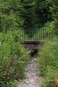 ponte selvatico