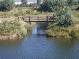 Ponte di legno con anatre