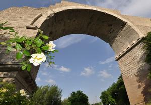 una rosa per il ponte di Augusto