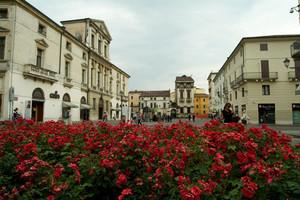 Vicenza: piazza Castello fiorita