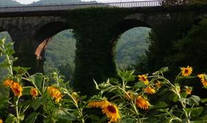 il ponte di cisano