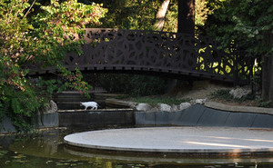 Il ponte e il gatto