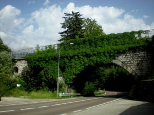 Il ponte si veste di verde