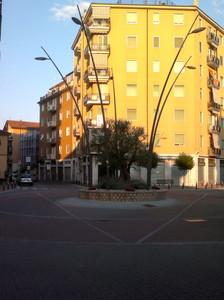 L'ulivo della pace in Piazza Italia