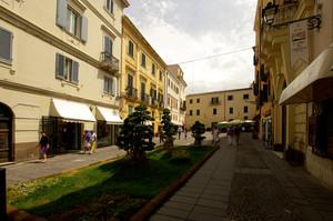 Bonsai in piazza