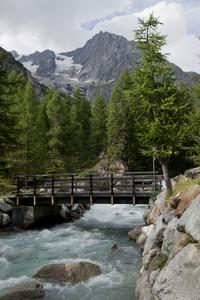 Tra pini e montagne