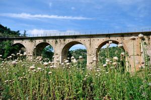 fiorellini spontanei per un ponte