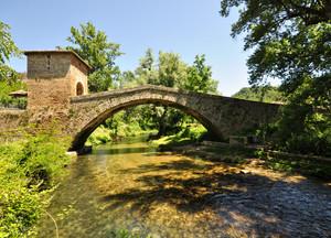 un ponte tra il verde