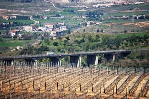 ponte dell'A3 vigne di Castrovillari