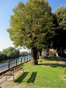 Una panca con vista Arno