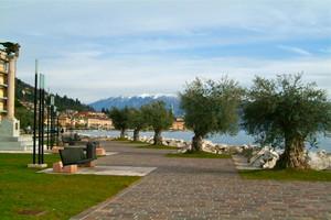 Secolari Ulivi tra il Leone ed il Lago