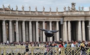 un piccione prende il volo a p.zza San Pietro
